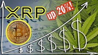 Ripple XRP up 20%! Marijuana stocks go crazy. Bitcoin price analysis
